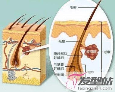 植发后多久开始生长 休止期到生长期三个月完美蜕变